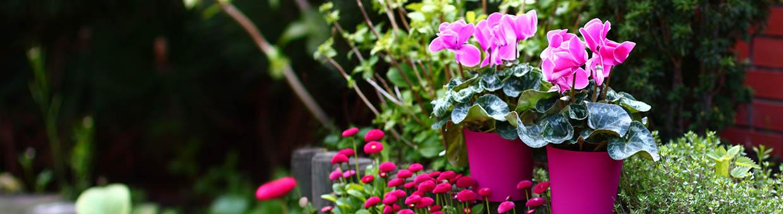 Shop Blumenstander